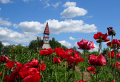 13 reasons why to visit Bauska in summer high season